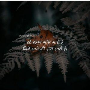 sad shayari image in hindi with a tree green backround